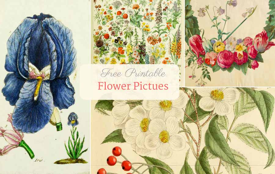picture about Free Printable Flowers identify Eye-catching No cost Traditional Flower Pics In direction of Obtain - Visualize