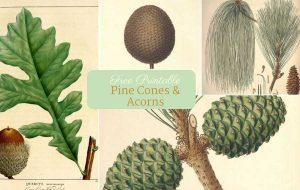 free vintage botanical prints for fall