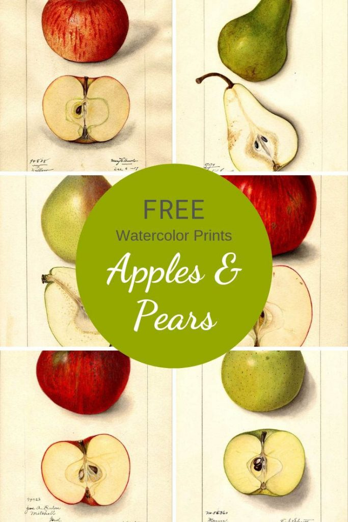Free apple and pear prints