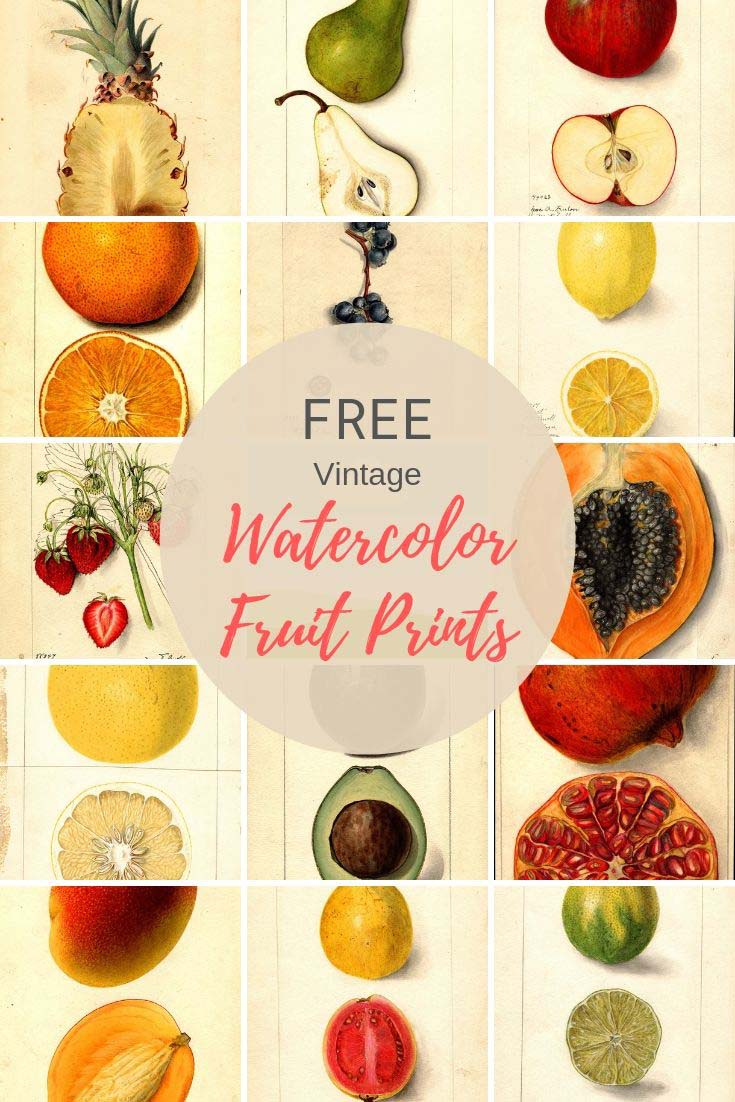 watercolor fruit prints