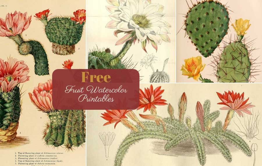 image regarding Free Printable Vintage Images titled 10 Eye-catching Typical Cactus Paintings in the direction of Obtain - Think about