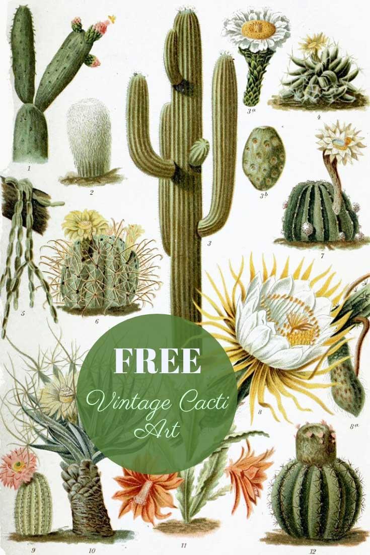 Free Printable vintage cactus paintings