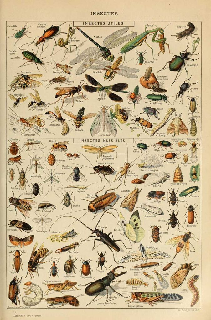 Vintage Natural history poster of useful and harmful insects