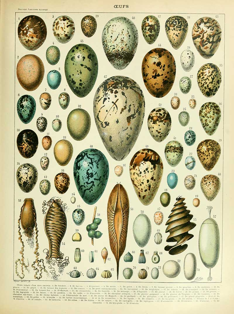 Egg identification poster by Adolphe_Millot_oeufs