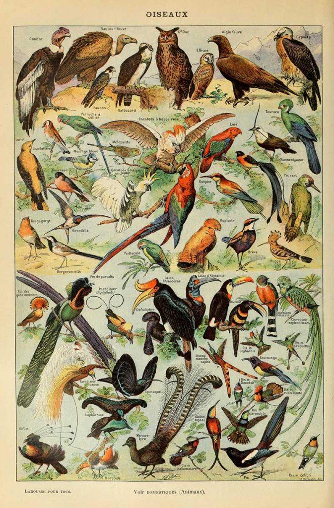 Adolphe Millot Birds of Prey