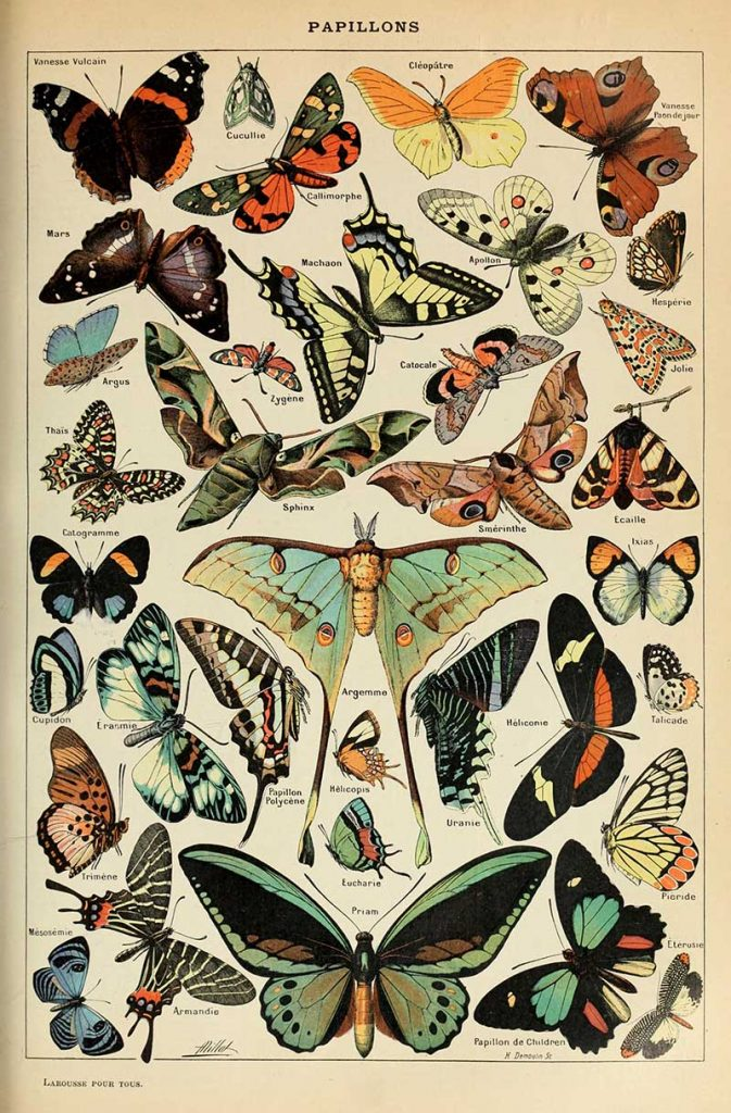 Adolphe_Millot_papillons butterfly poster