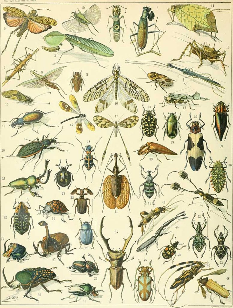 Insect painting poster Adolphe Millot