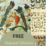 free insect bird natural history poster