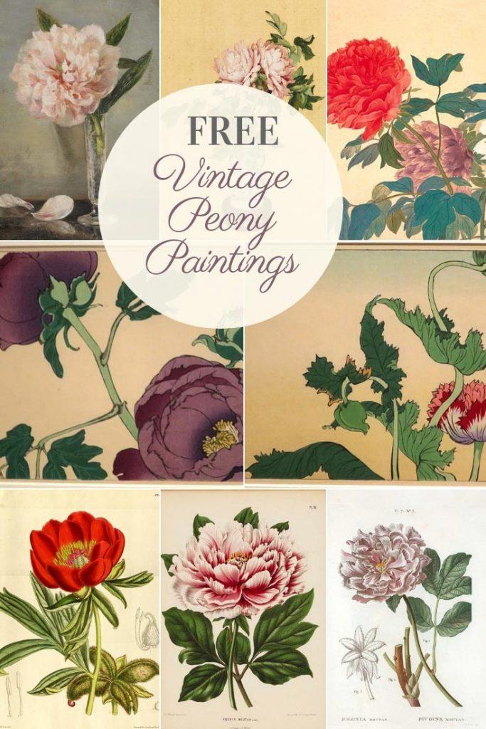 Peony flower paintings
