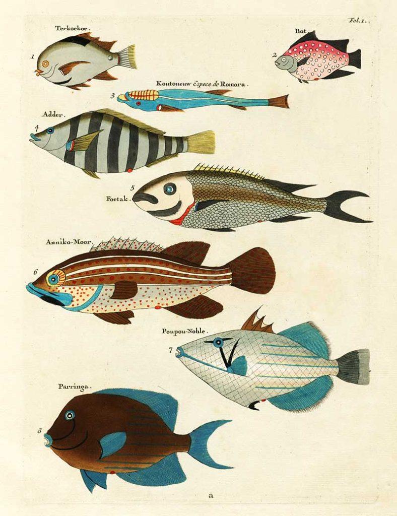 Exotic fish drawings 1-8