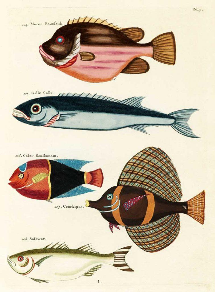 Louis Renard Tropical Fish