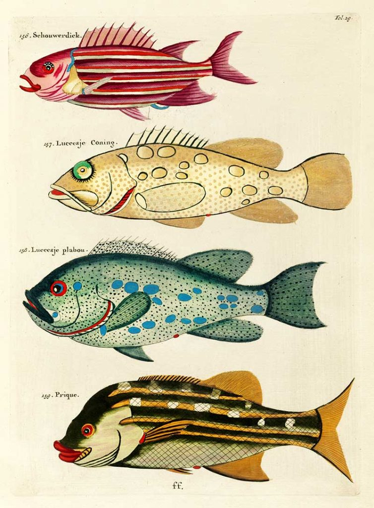 he Schouwerdick and Other Fish 136-139
