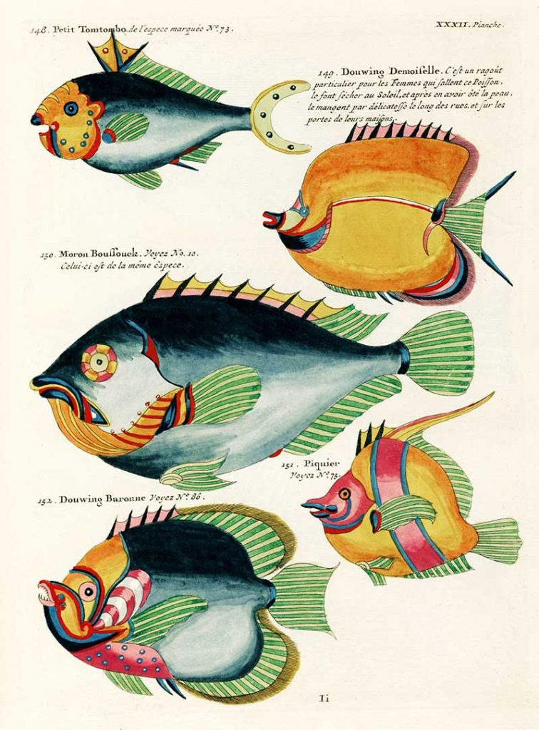 Colourful and surreal illustrations of fishes found in Moluccas