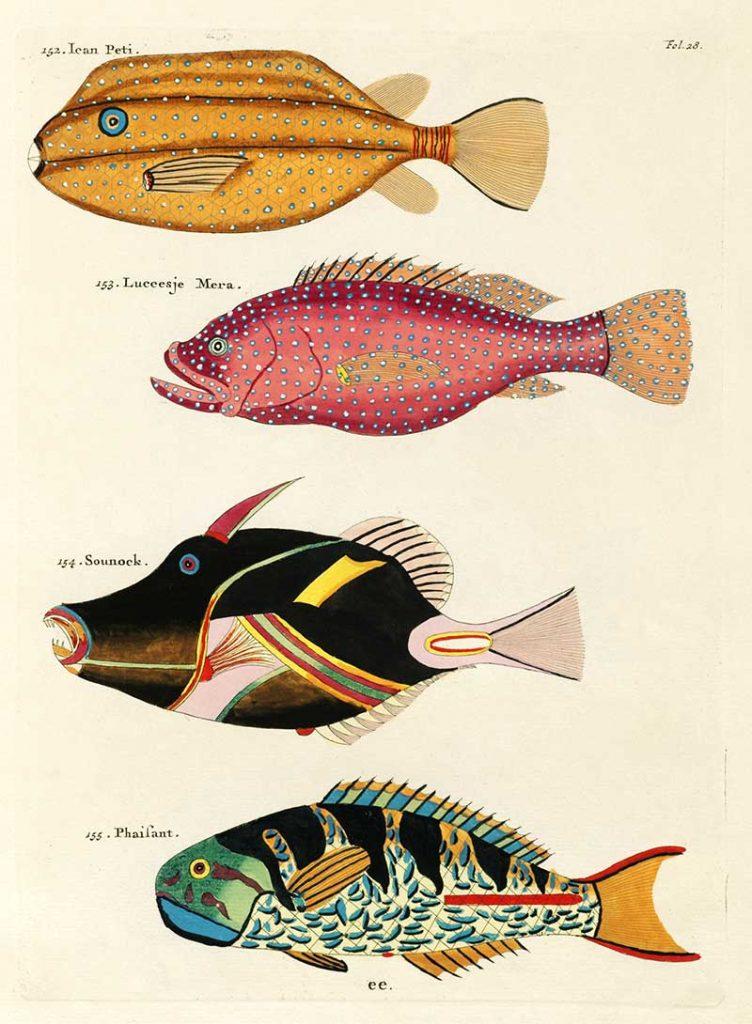 Louis Renard Fish Plates
