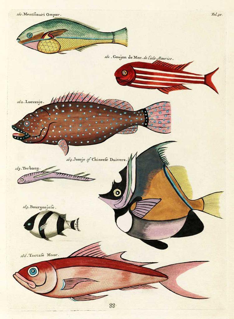 Antique fish Louis Renard 160-166