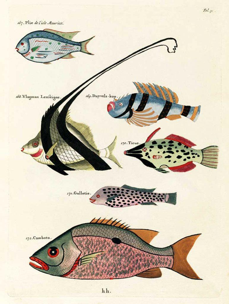 Fish painintgs 167-172_Louis_Renard