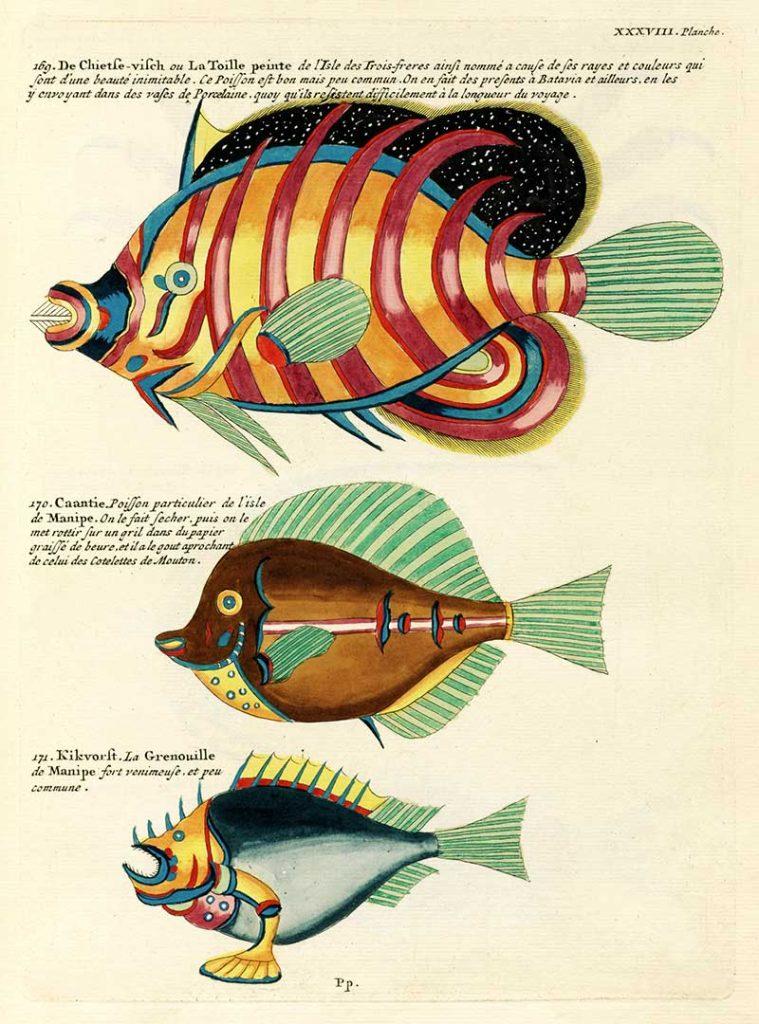 Antique fantastical fish illustrations