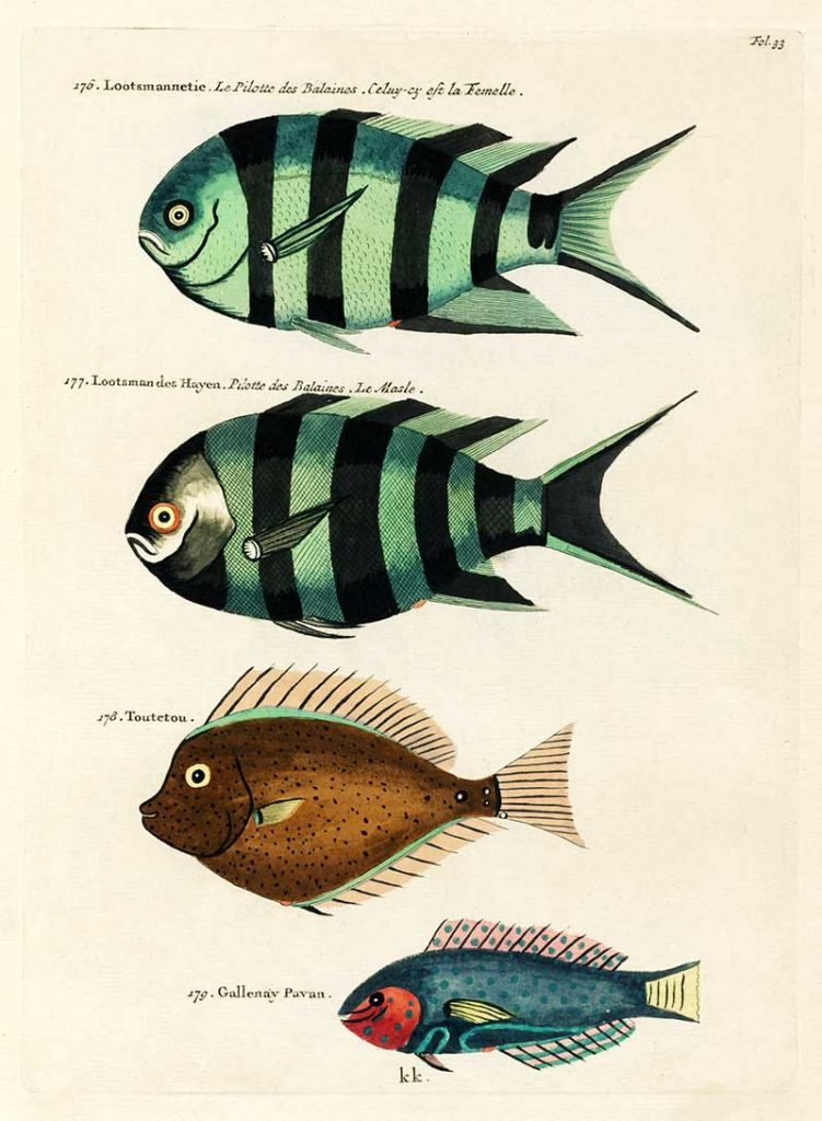 Antique Louis Renard Fish 176-179