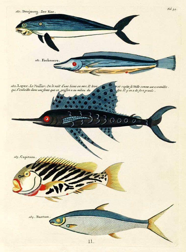 vintage fish prints