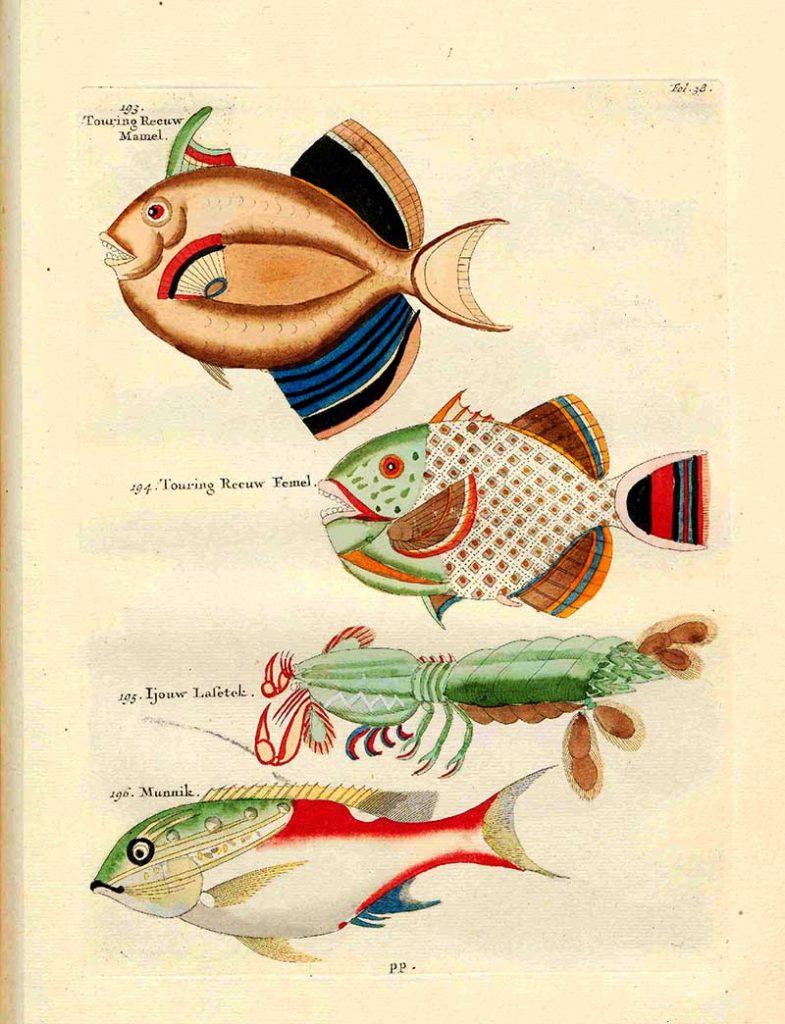 Fish 193-196