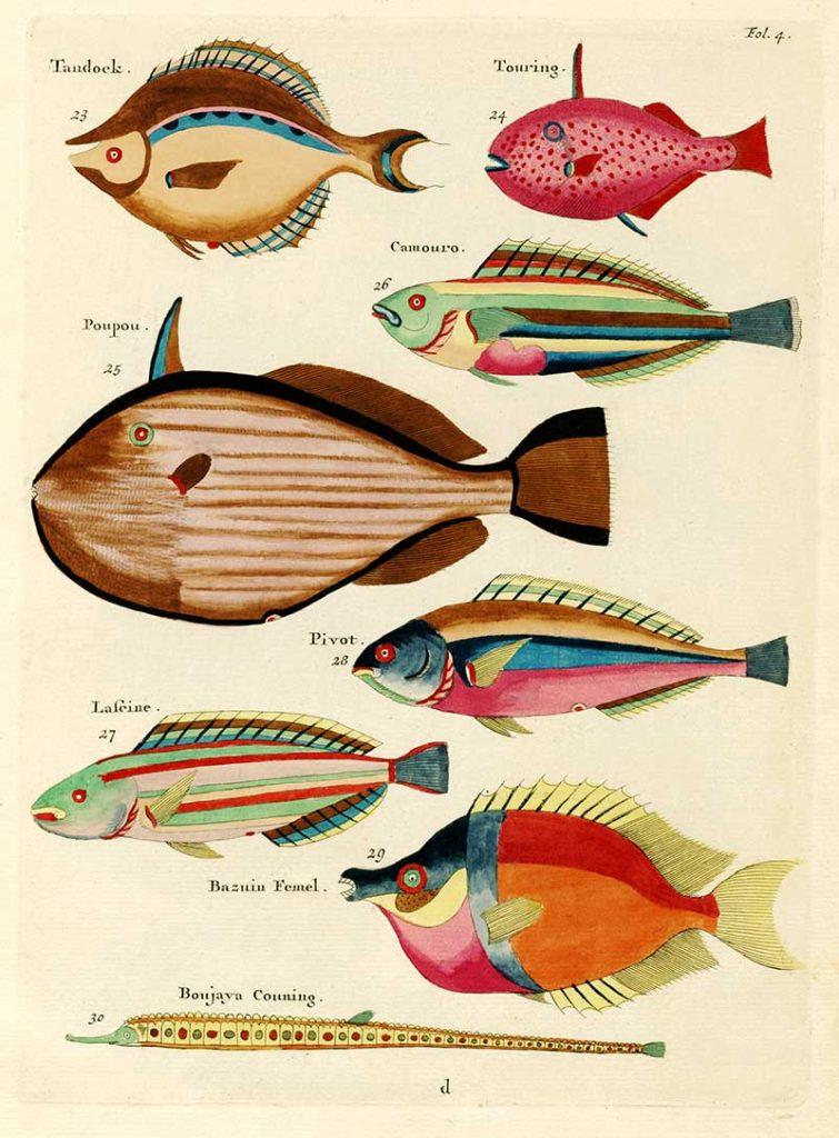 Fish prints 23-30