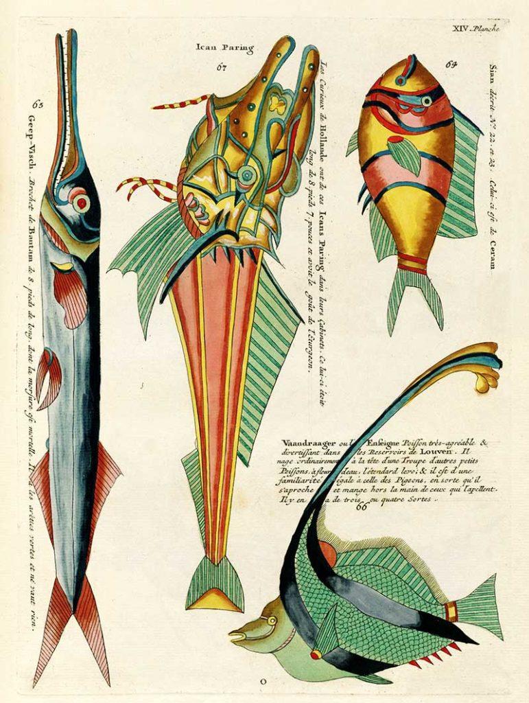 Vintage tropical fish