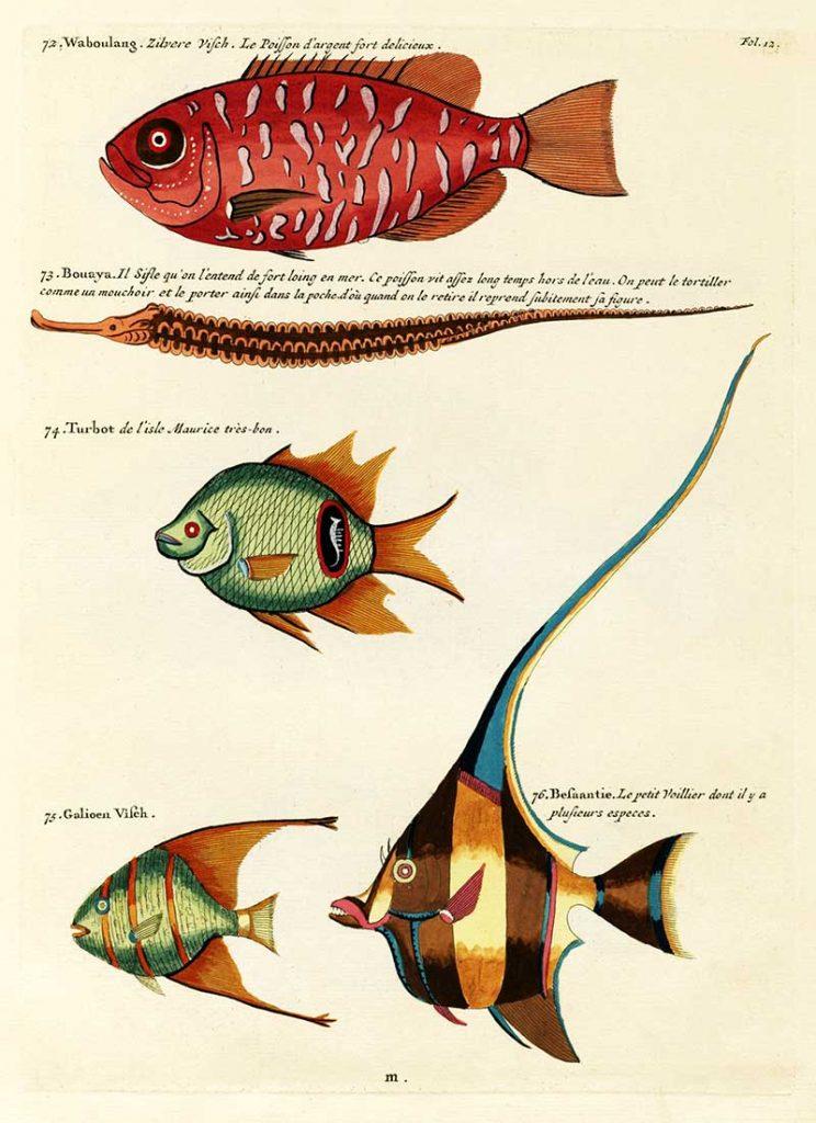 Louis Renard fantastical fish