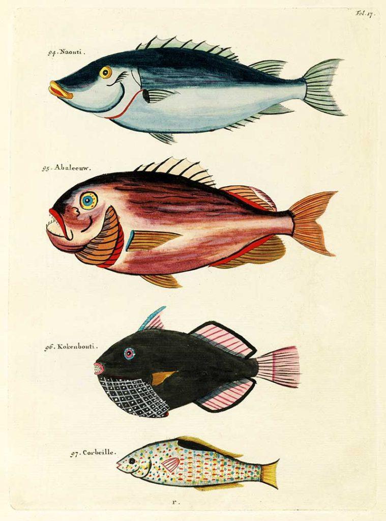 Free fantastical fish prints