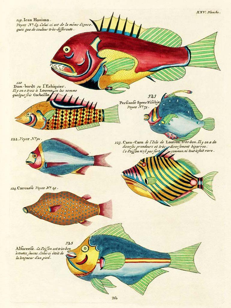 Louis Renards fish paintings