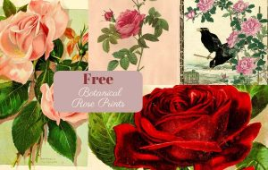 Free botanical rose prints to download