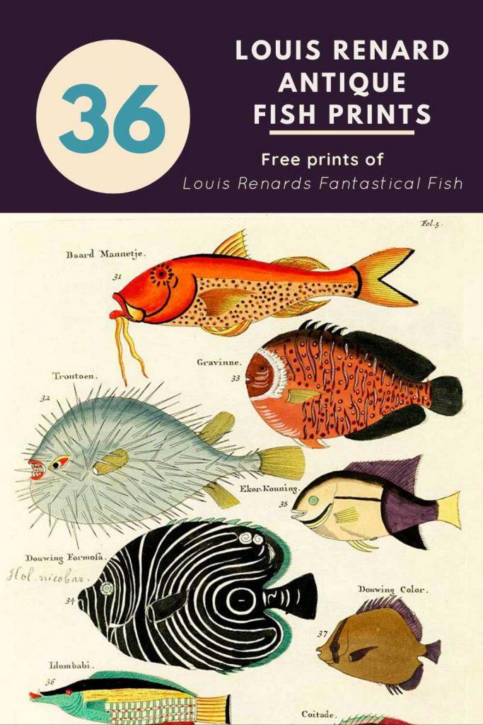 Louis Renard fish pin