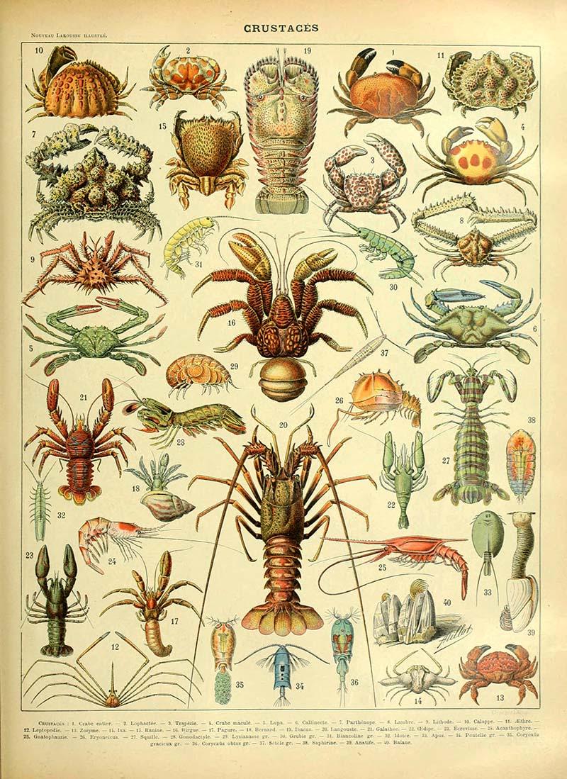 Crustaceans sea life poster