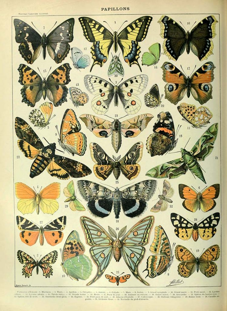 vintage butterfly images
