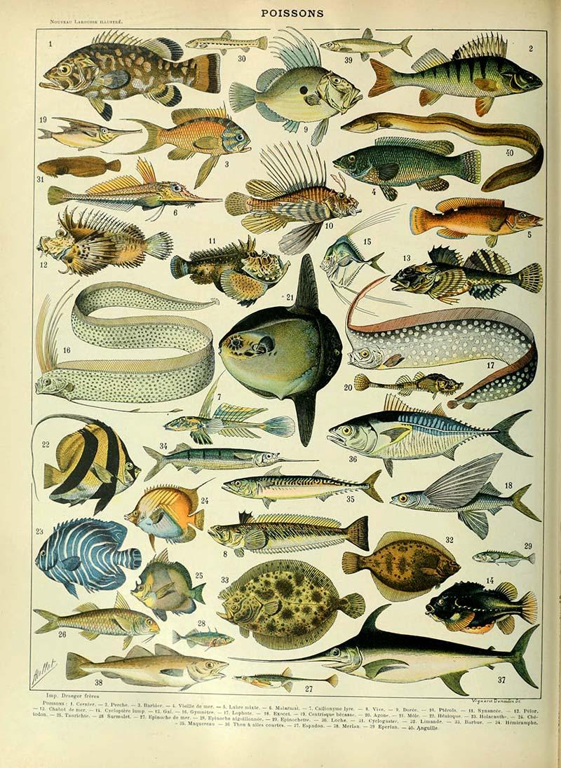 Fish identification marine life poster