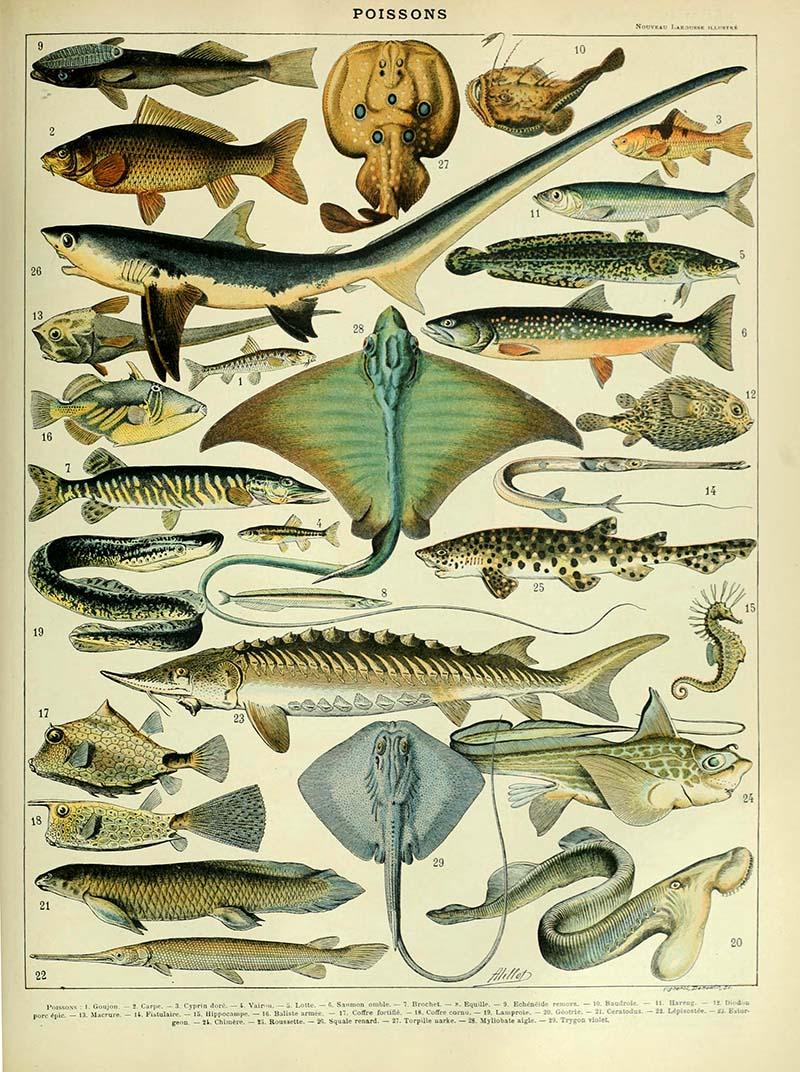 Poissons B marine life poster