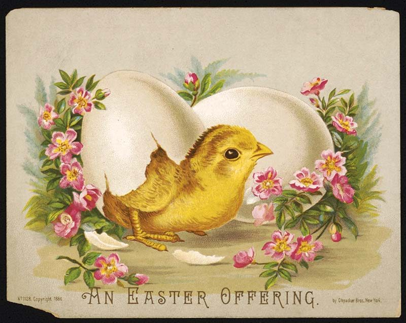 Easter postcard with hatching chick