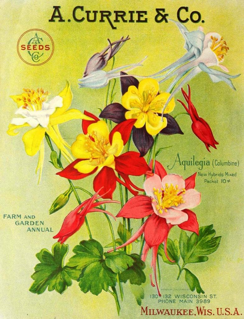 Aquilegia seed packet art