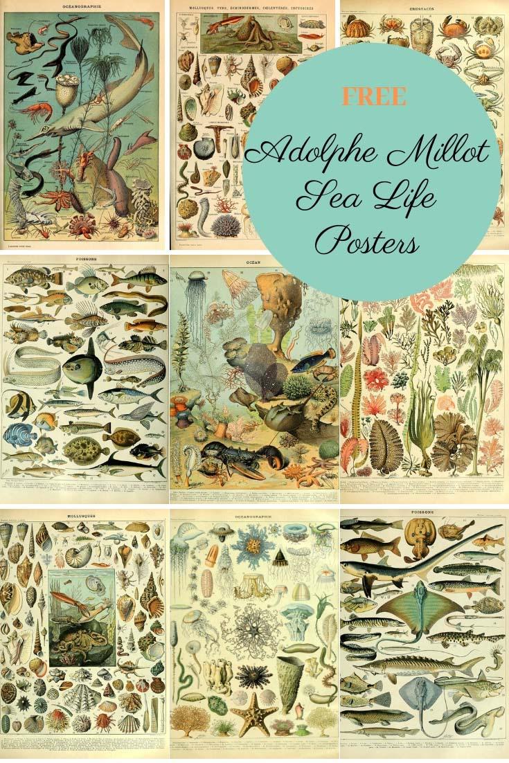 Natural History Sea life posters of Adolphe Millot