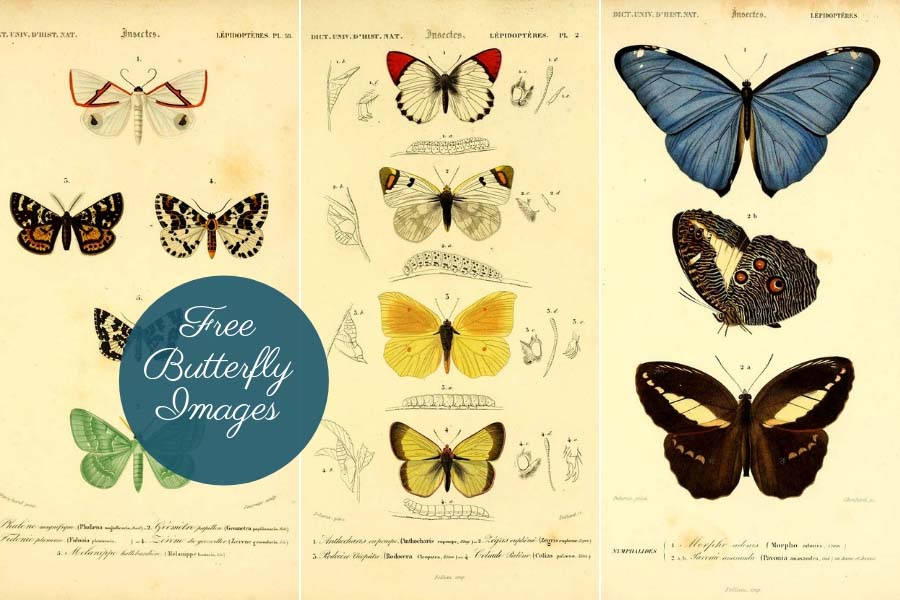 copyright free butterfly images to download