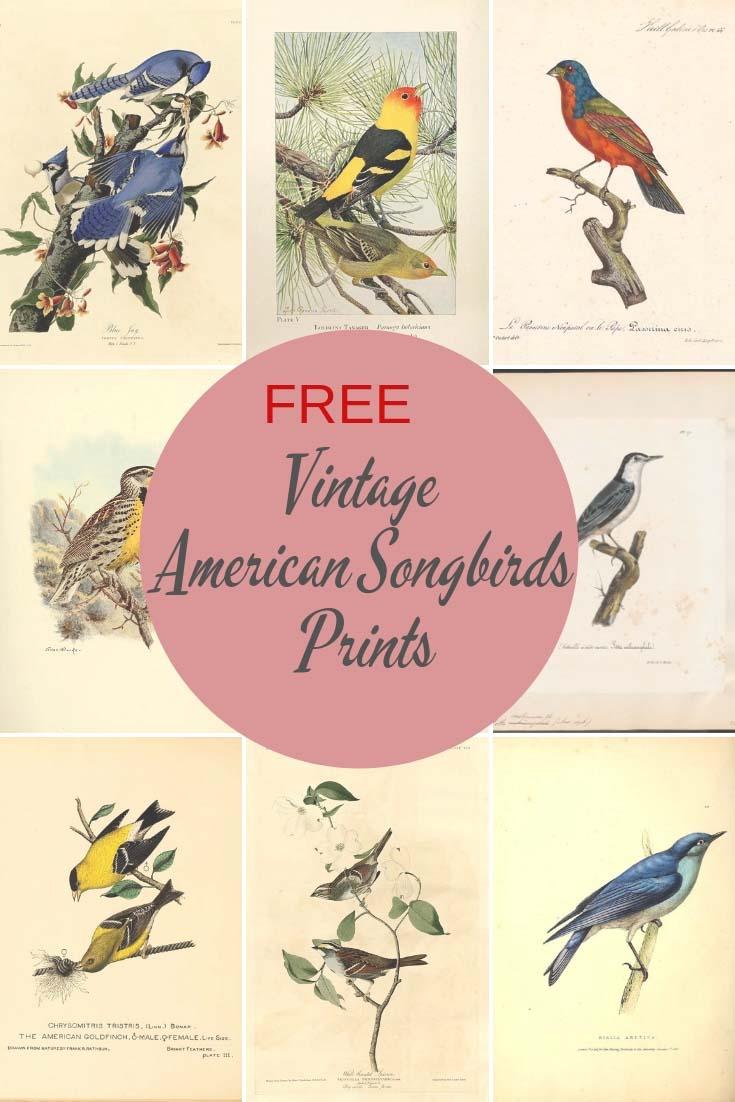 American Songbirds prints