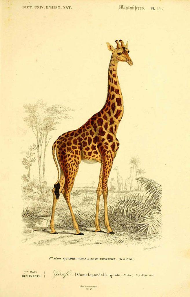 vintage animal print giraffe