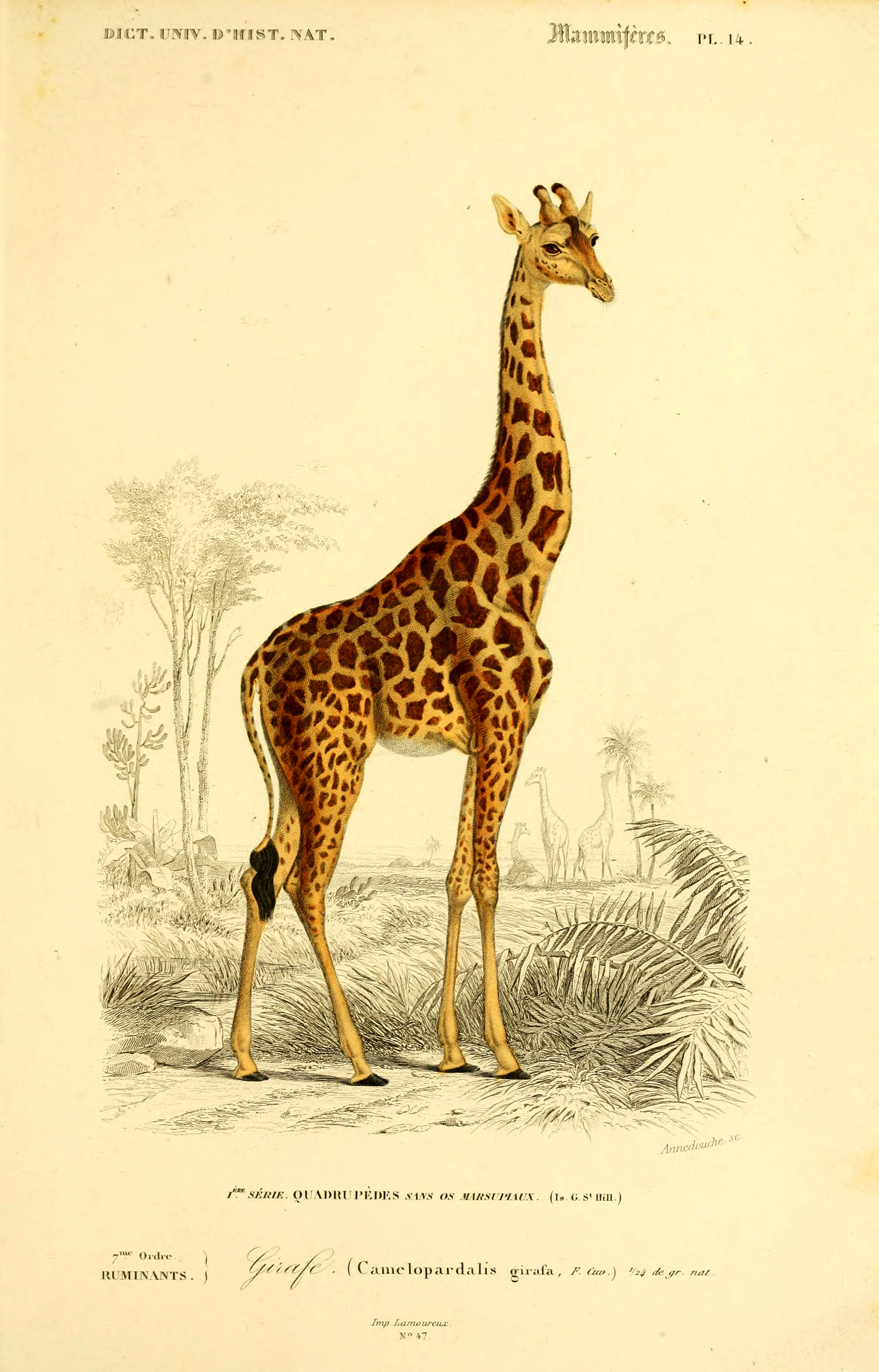- Amazing Royalty Free Vintage Animal Prints To Download - Picture