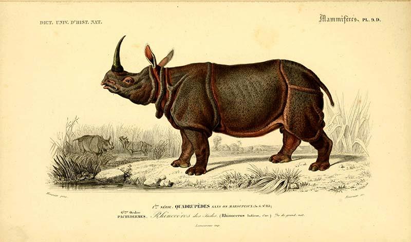 Vintage Rhinoceros