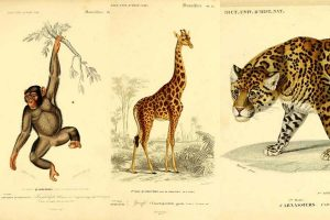 vintage animal prints
