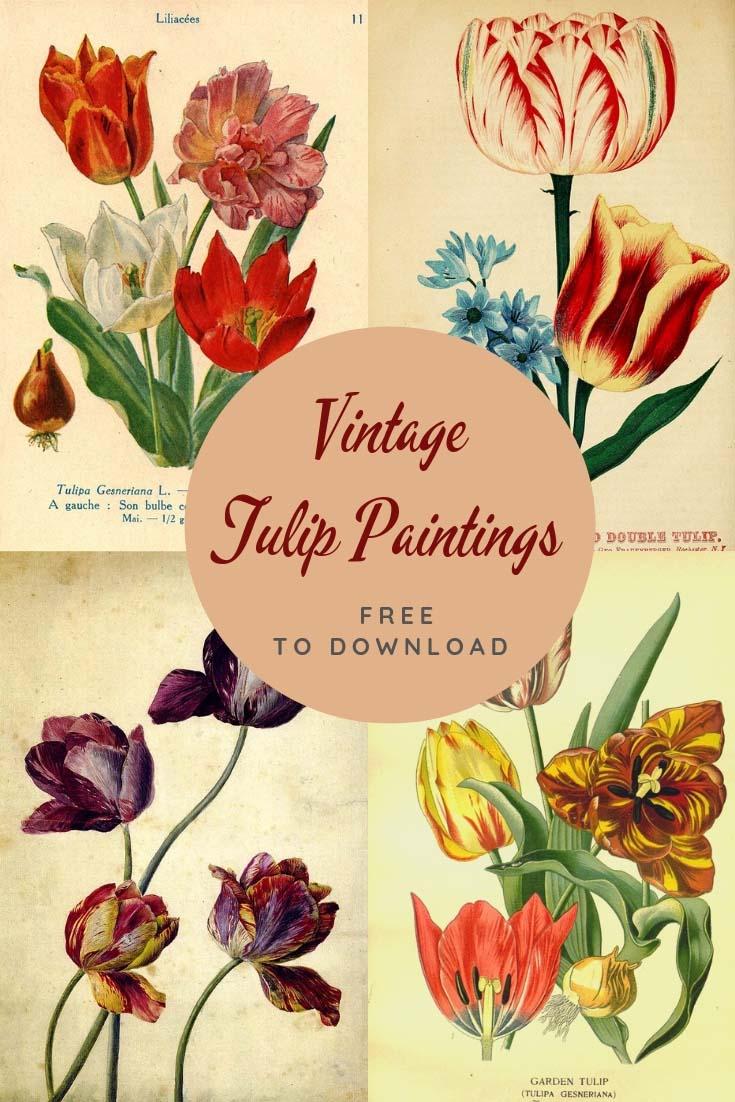 Vintage tulip paintings to download