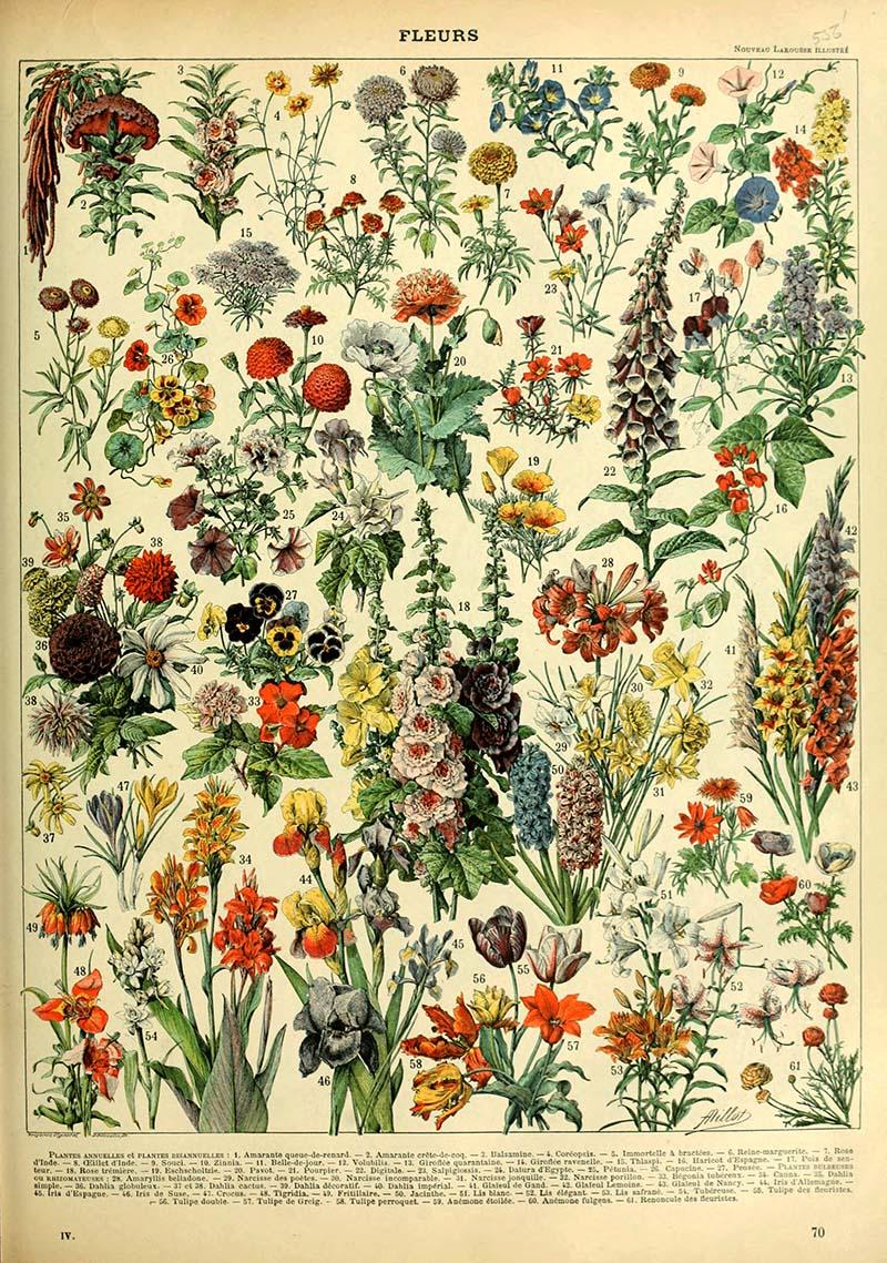 Fleurs annuals and biennials