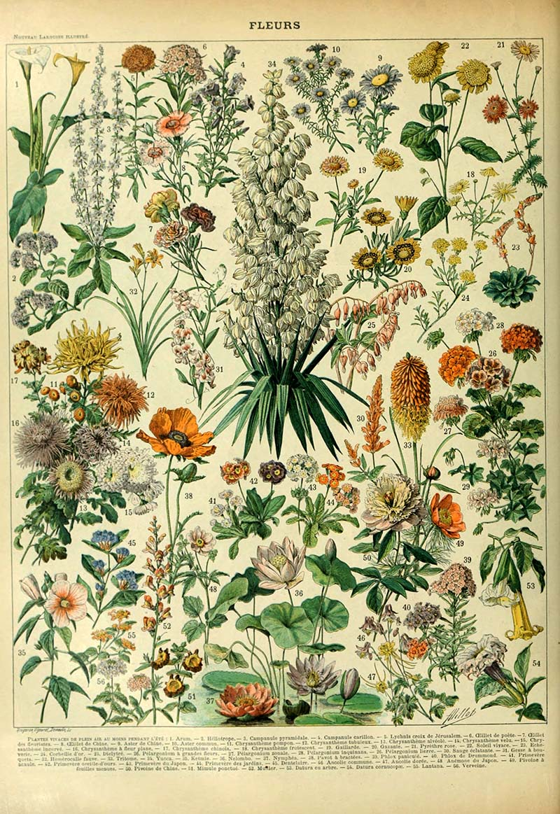 Flowers B Adolphe Millot Flower posters