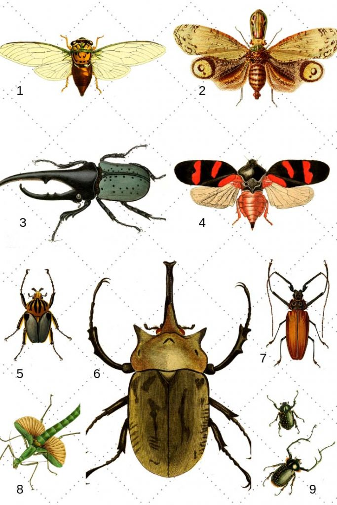 free insect prints as clipart