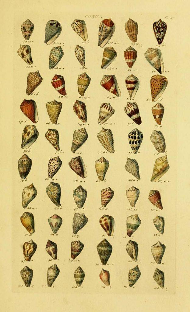 Conical shells