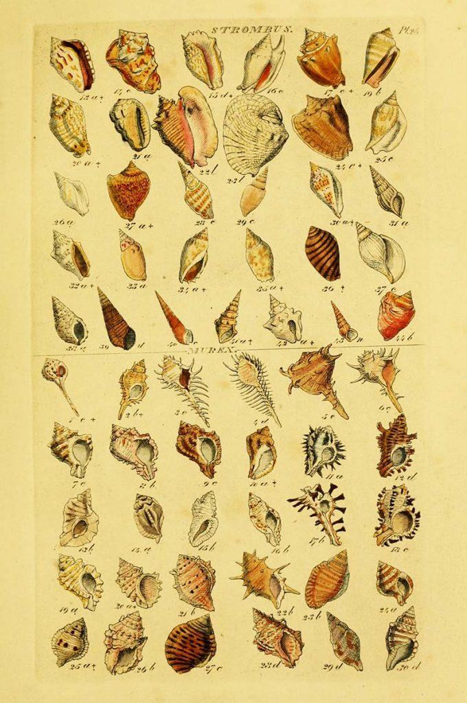 Spiky shells
